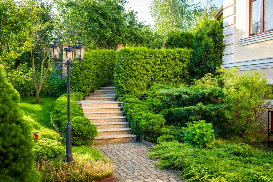 hedge bushes pathway to home