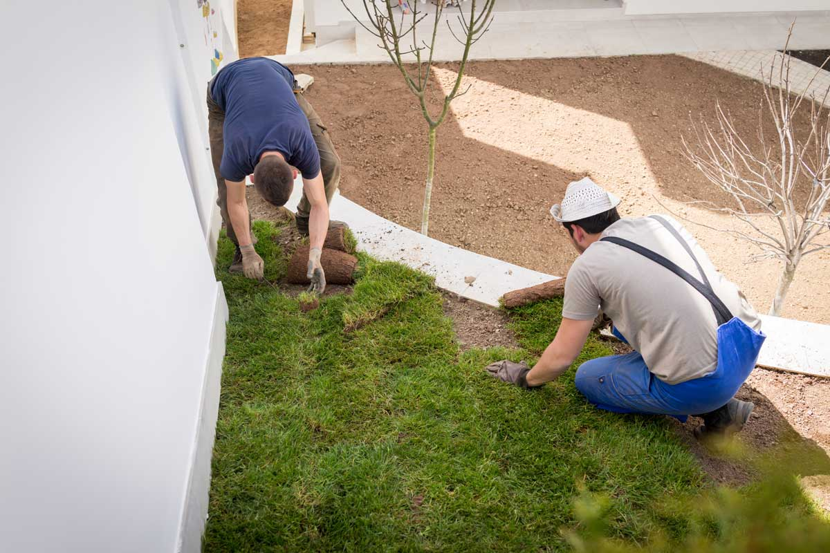 two landscapers laying new grass wollongong