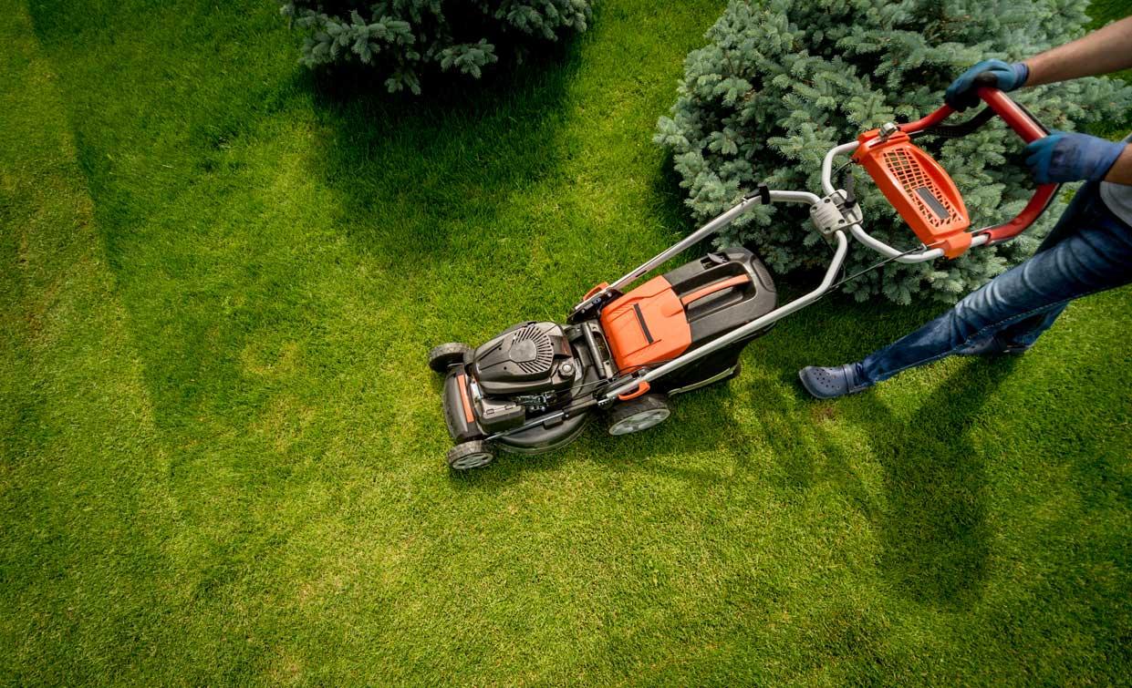 gardener mowing lawns in backyard